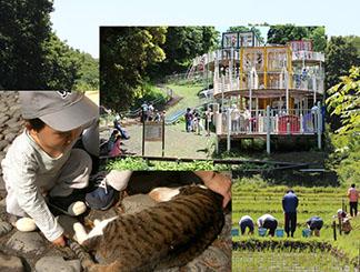 都市の自然環境とひとの生活